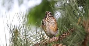 Bird Unafraid Albion, NY Summer 2020