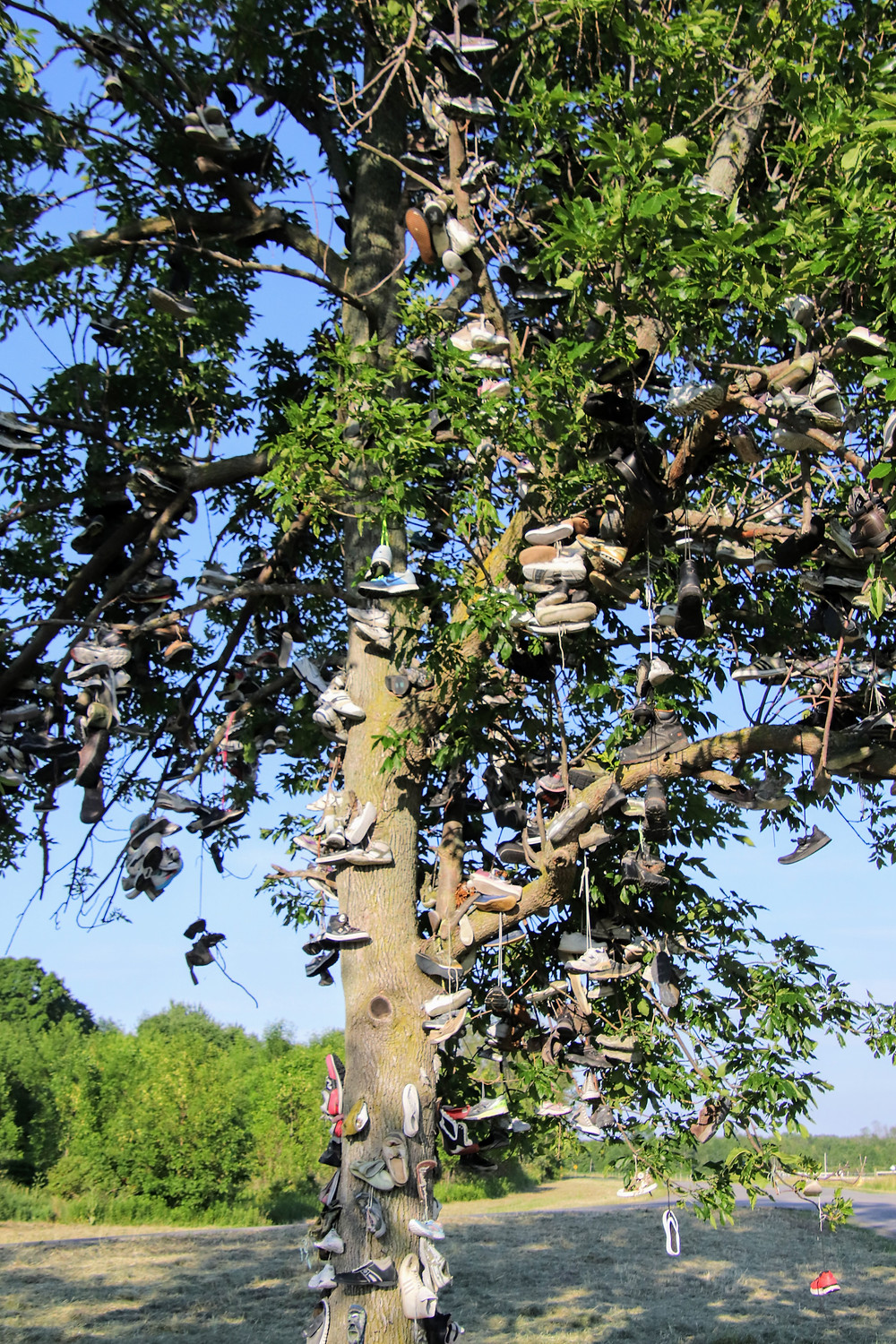 A Tree of Soles