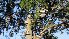 Trees of Soles and Their Unheard Stories
