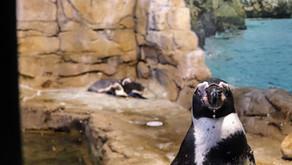 Mr. Penguin's Smirk