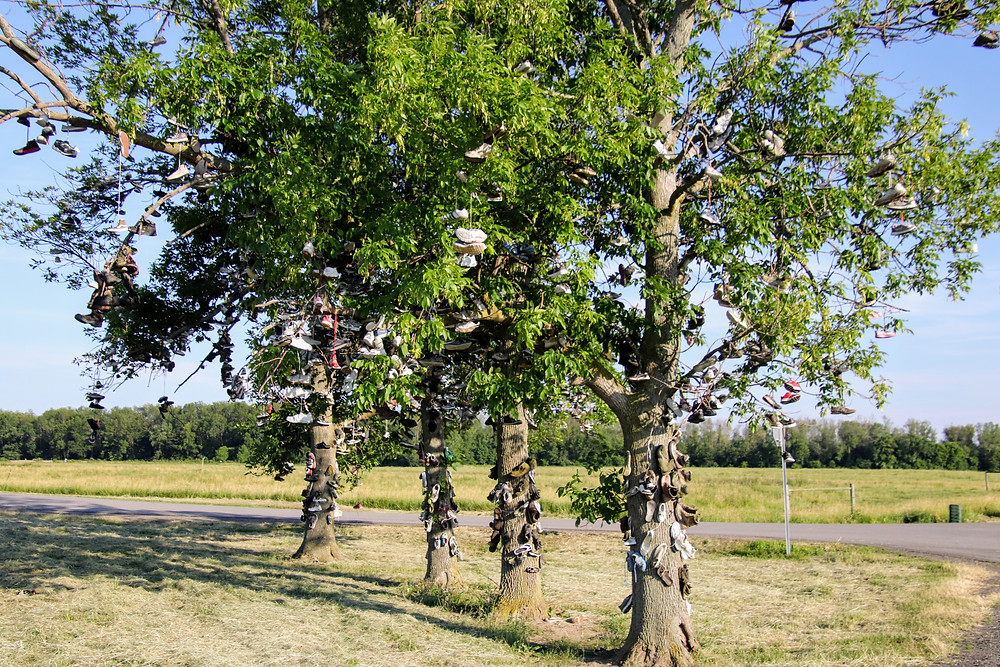 A Row of Shoes in Branches