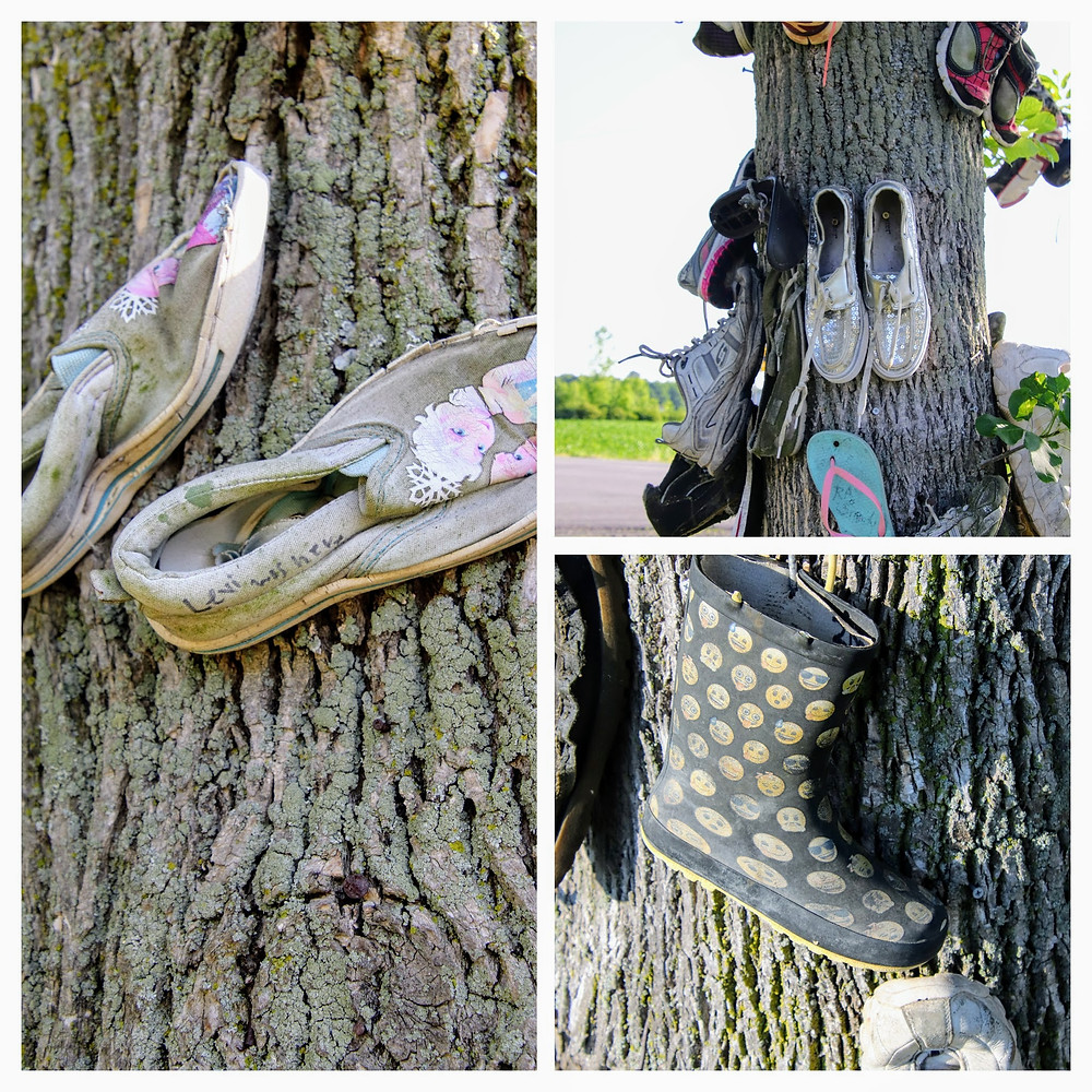 Some Soles are nailed to the trees.