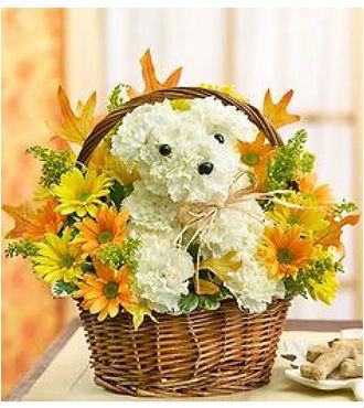 Autumn Puppy Bouquet (HBFS21)