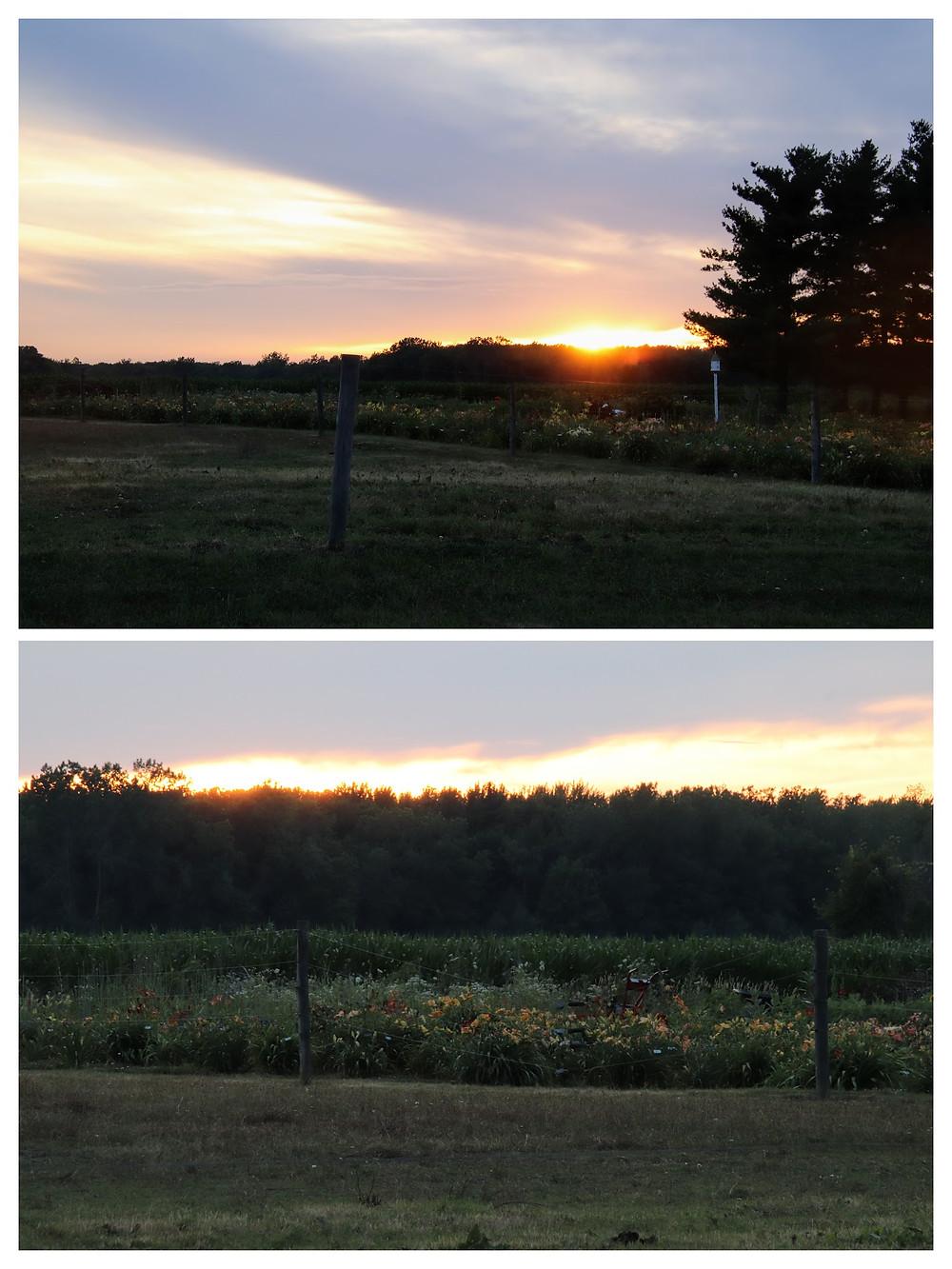 Sun Setting Over the DayLillies