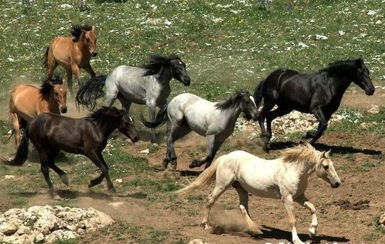 Wild and Free Horses