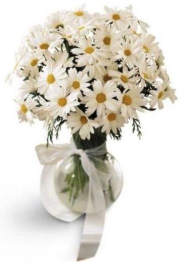 Daisy Vase (BFS36)