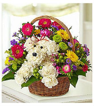 Puppy Greeting Basket (BFS43)