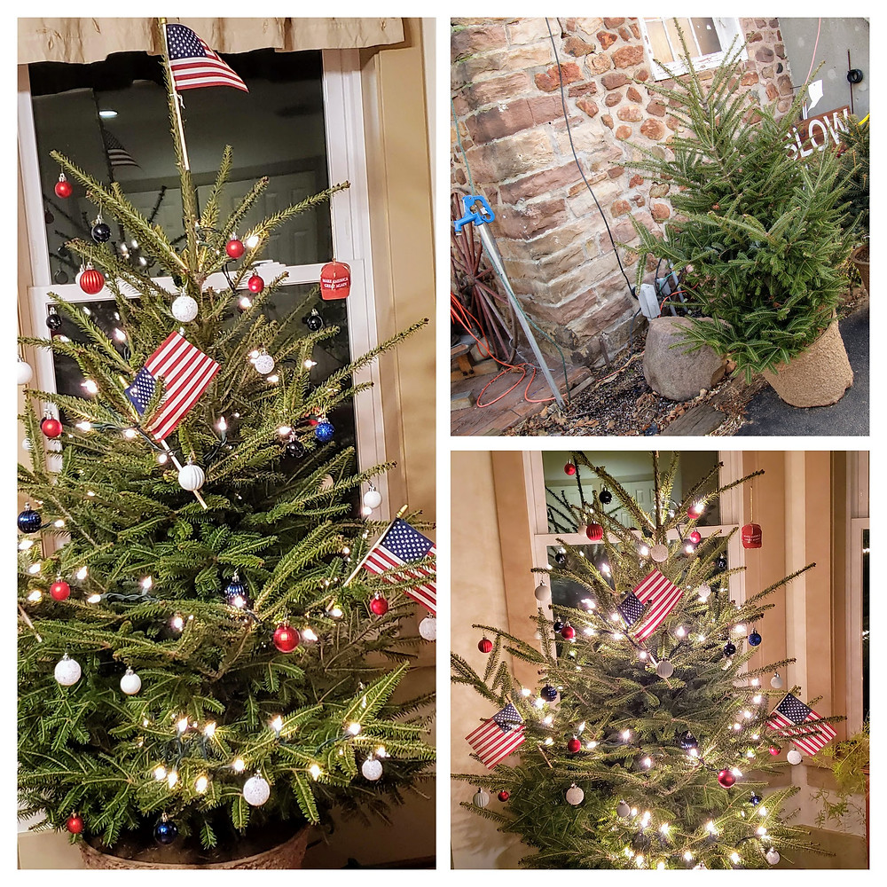Before and after of our Potted Patriotic Tree