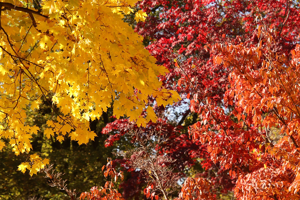 All the best of Fall colors