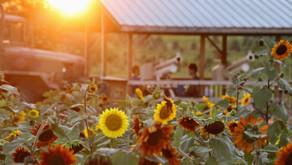 Stokoe Farms NY, August 2020