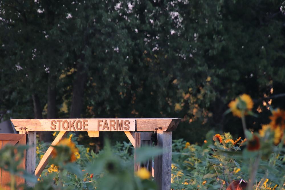 Welcome to Stokoe