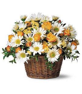 Joyful Roses and Daisies (BFS57)