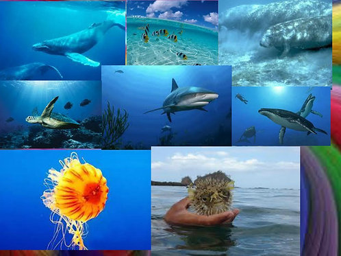 Marine Biology 3rd-4th