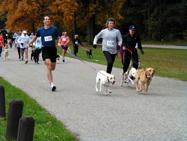 run-with-the-dogs-450x338.jpg