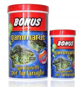 bonus - gamberetti per tartarughe