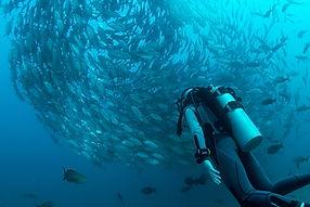 Voyages de plongée