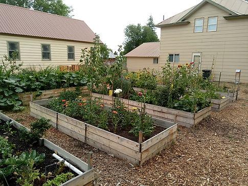 community garden 2020.jpg