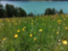 Arluis-Blumen-06-2020.jpg