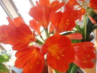 花は見られることによって救われる