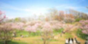 f_hiraokaparuk_01main-1200x600-1200x600.