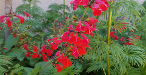 Spring Flowers for Attracting Hummingbirds