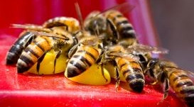 How do I keep Bees and Wasps out of my Hummingbird Feeder?