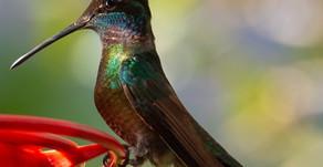 Hummingbird Feeding 101