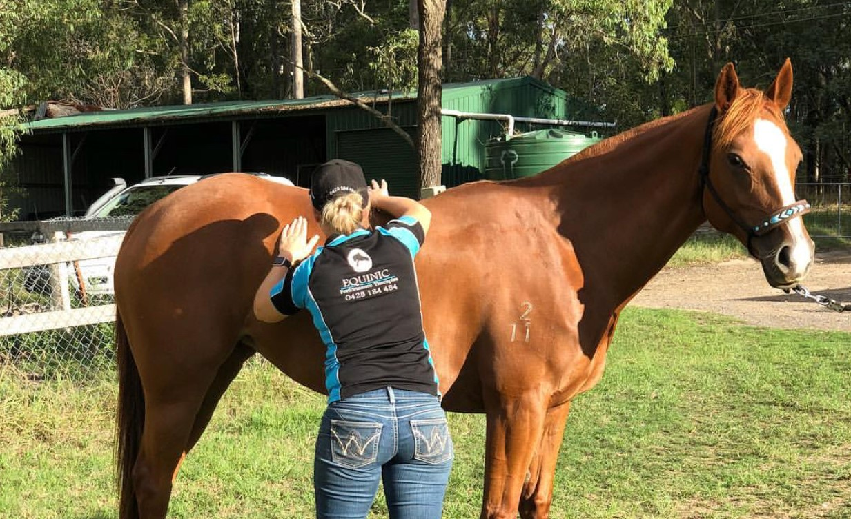 Equine Massage & Acupuncture