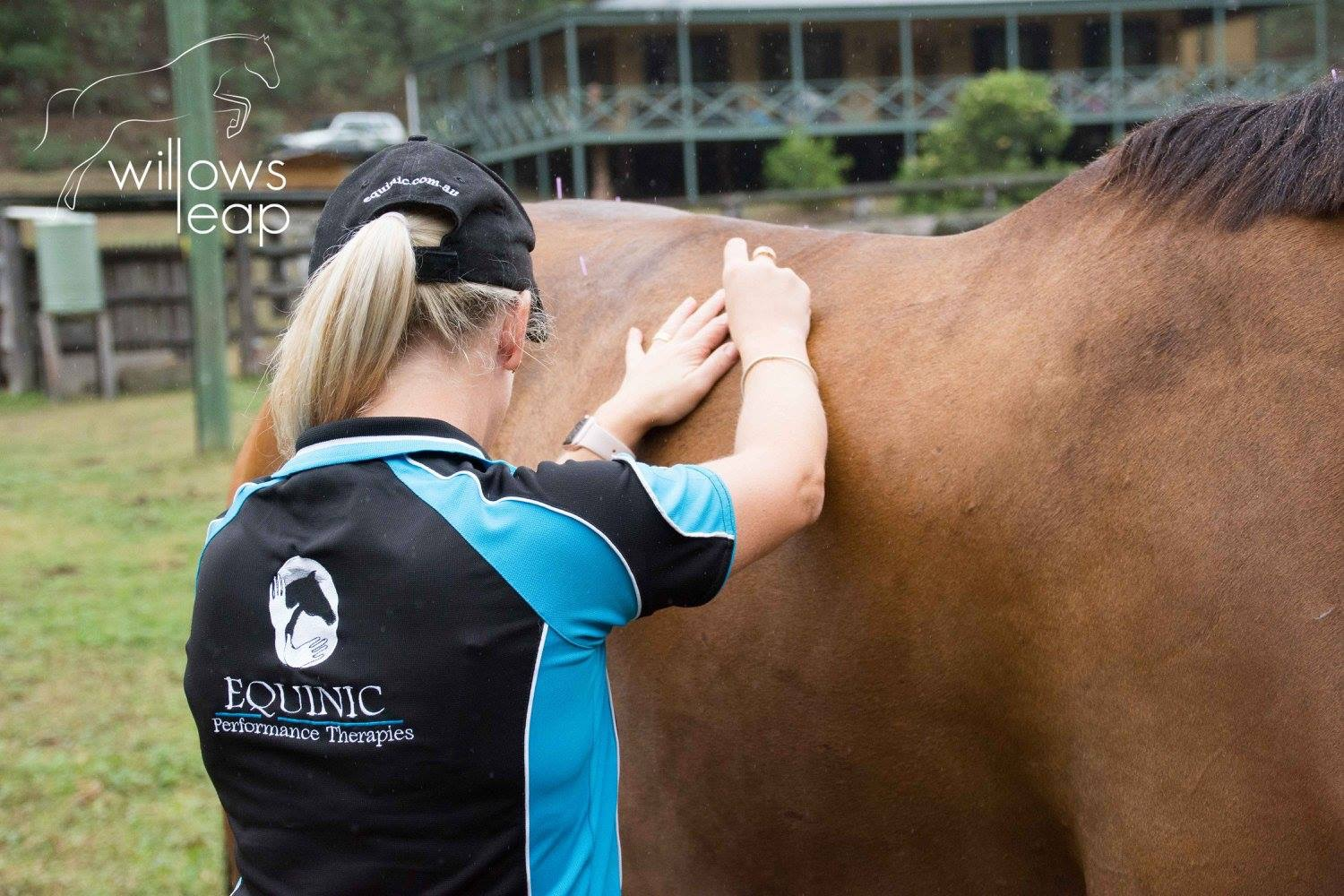 Equine Acupuncture 2