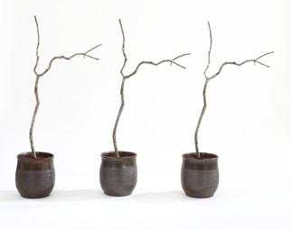 Les : arbre = 4 : 1