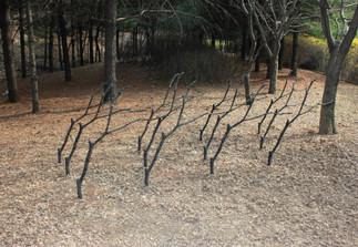 Les : arbre = 1 : 11