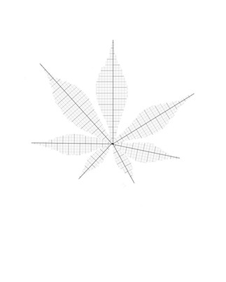 Plan de N°1 acer palmatum Thunb