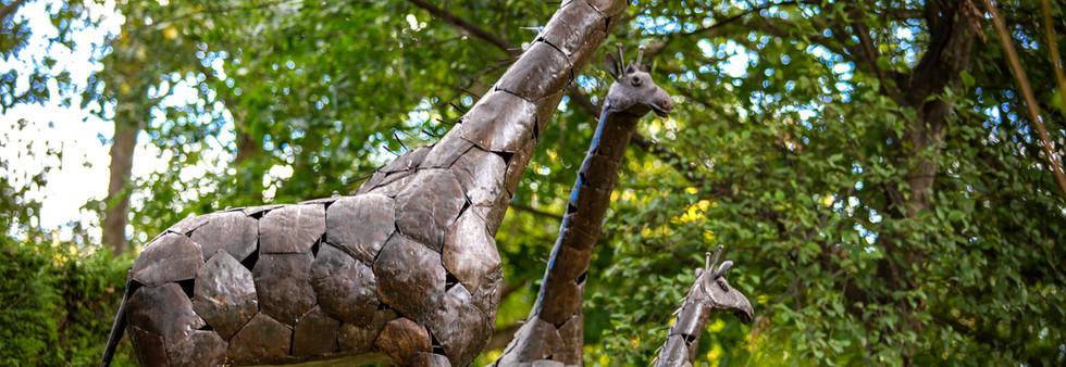giraffe06web.jpg