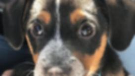 Planned Pethood Pasco