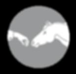 Denis Reis Universal Horsemanship