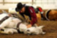 Dennis Reis Horse Trainer