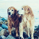 dogs by the lake_cropped.jpg