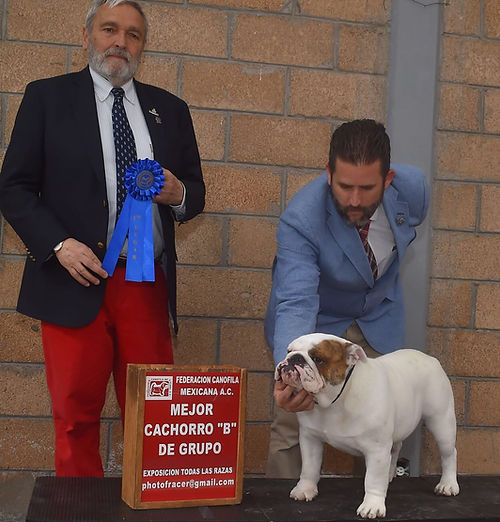 SMOKE ganando Winners Dog a los 13 meses