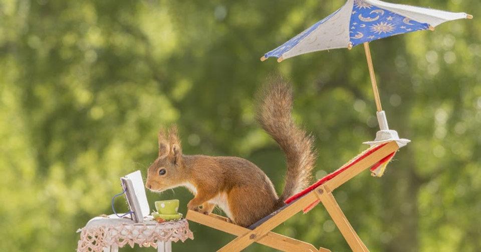summer-reading-animals.jpg