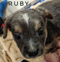 Ruby one
