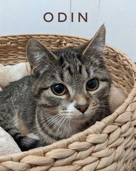 Odin one