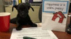 puppy adoption.jpg
