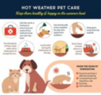 hot weather pet care.jpg