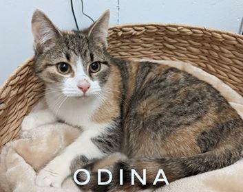 Odina