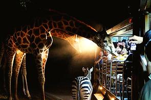 Night Safari Park, Chiang Mai, Thailand