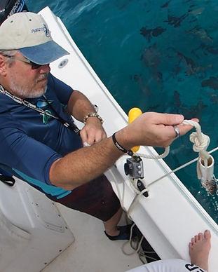 Shark OFF testing