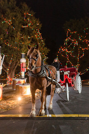 Celebration of Lights Horse drawn Carria