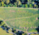 Brookdale Farms 2019 Corn Maze.jpg