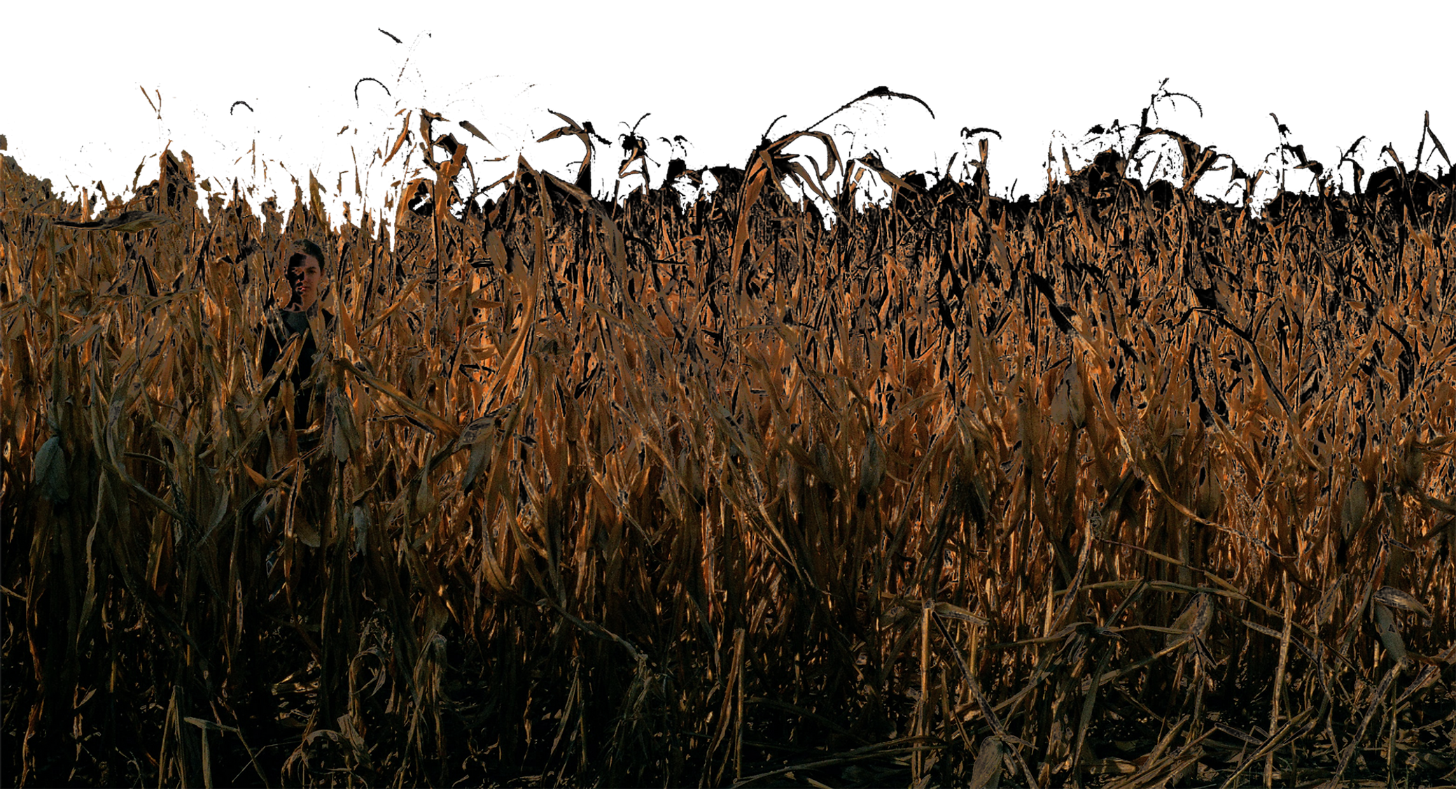 corn field smaller.png