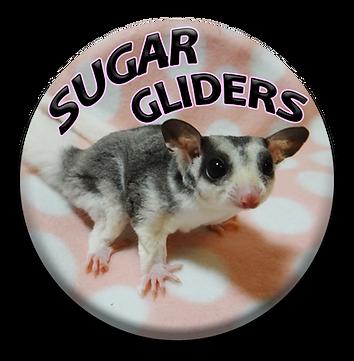 sugar gliders button 2.png